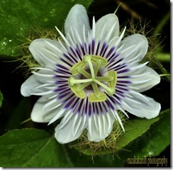 bilaran flower